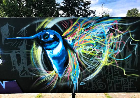 Hummingbird, Rotterdam